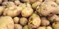 Patatesi buzdolabında saklarsanız... - FOTO