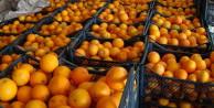 Rusya'dan Türk portakalına vergi