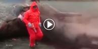 Sahile vuran balina bir anda patladı!