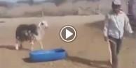 Sen misin keçiyi döven!