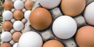 Tavuk yumurtası neden renklidir?