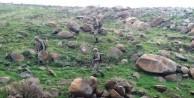 Varto'da çatışma: 2 asker yaralandı