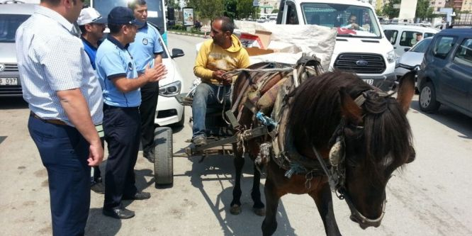 Trafiği tehlikeye atan at arabalarına zabıta dur dedi