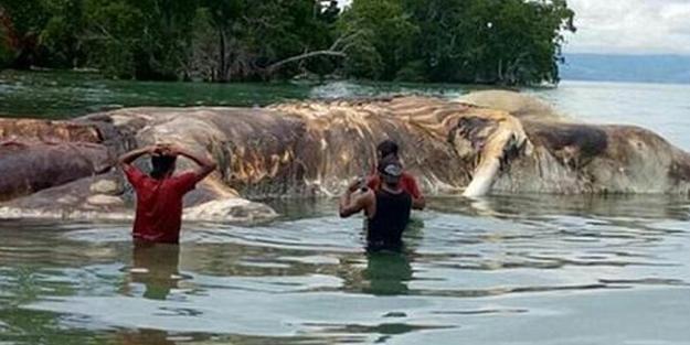 15 metrelik gizemli canlı... Kimse ne olduğunu çözemedi