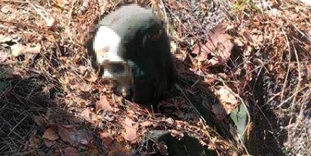 2 yıldır kayıptı! Ağaca kelepçeli halde iskeleti bulundu