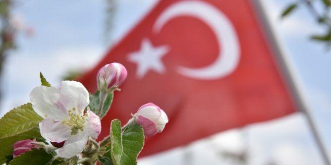 Elma ağaçları çiçek açtı