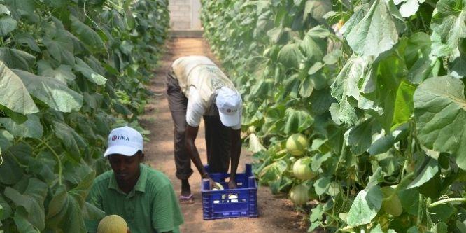 Somali Tarım Okulu Projesi