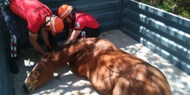 Yaralı halde bulunan Yılkı Atı Ankara'ya gönderildi
