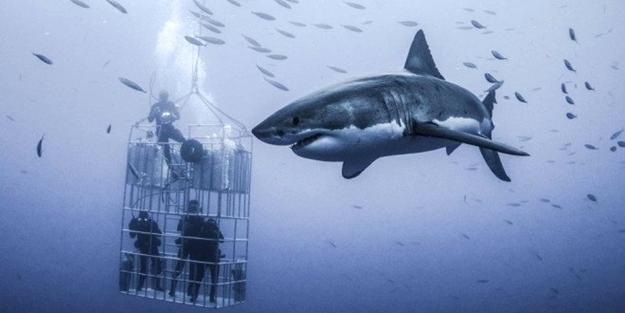 6 metrelik devasa köpek balığını görüntülemek için ölümü göze aldılar