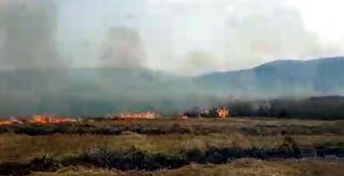 60 dönüm buğday tarlası yandı