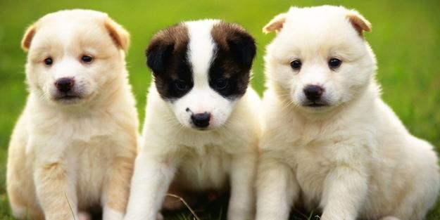 7 köpek yavrusu koruma altına alındı