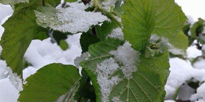 Yığılca'da 23 Nisan kutlamalarına kar engeli
