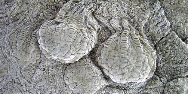 80 milyon yıllık fosiller keşfedildi!