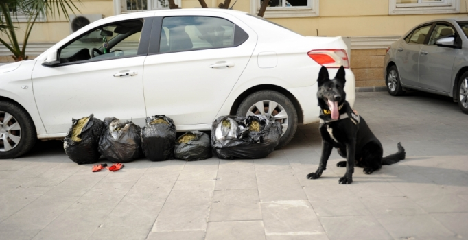 Adana'da piyasa değeri 55 milyonluk uyuşturucu ele geçirildi