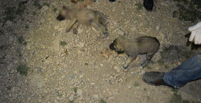 Adıyaman'da 8 yavru köpek vahşice katledildi