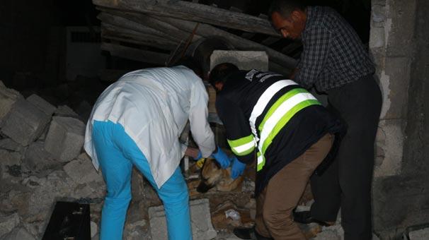Adıyaman'da meydana gelen depremde enkaz altında kalan köpek 16 saat sonra çıkarıldı