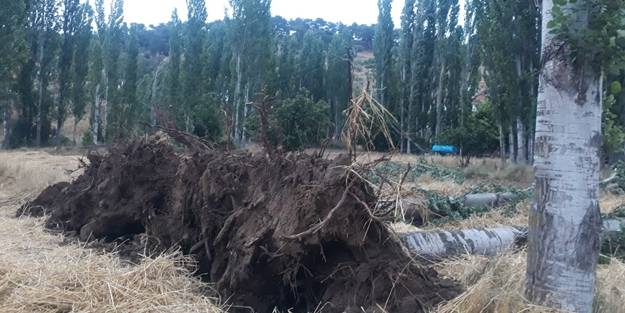 Ağaçlar devrildi, elektrik telleri koptu!