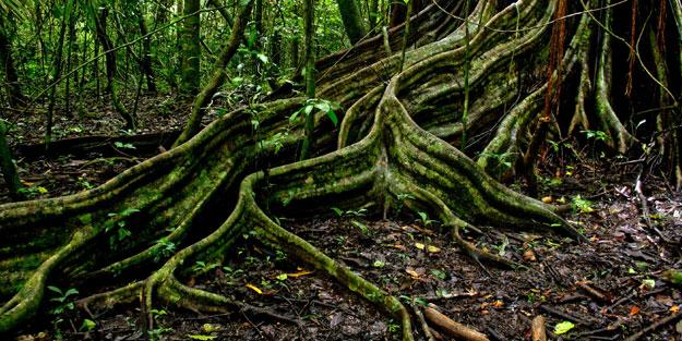 Ağaçların yeraltı internet ağı
