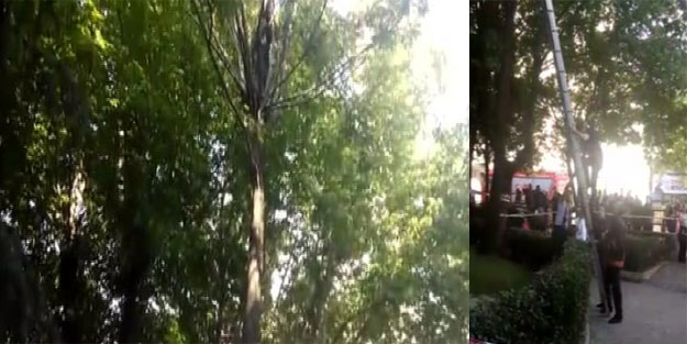 Ağaçtaki kediyi kurtardı, kendi mahsur kaldı