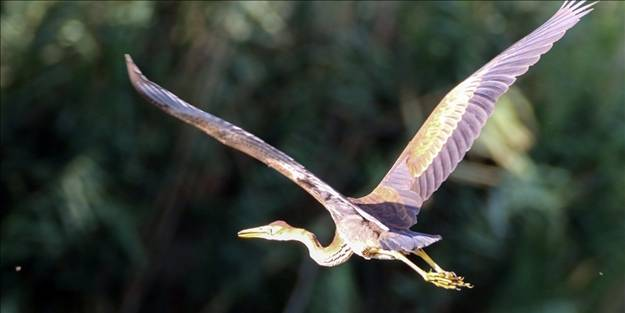 Çok nadir ortaya çıkıyor... Ağrı'da uçarken görüntülendi!