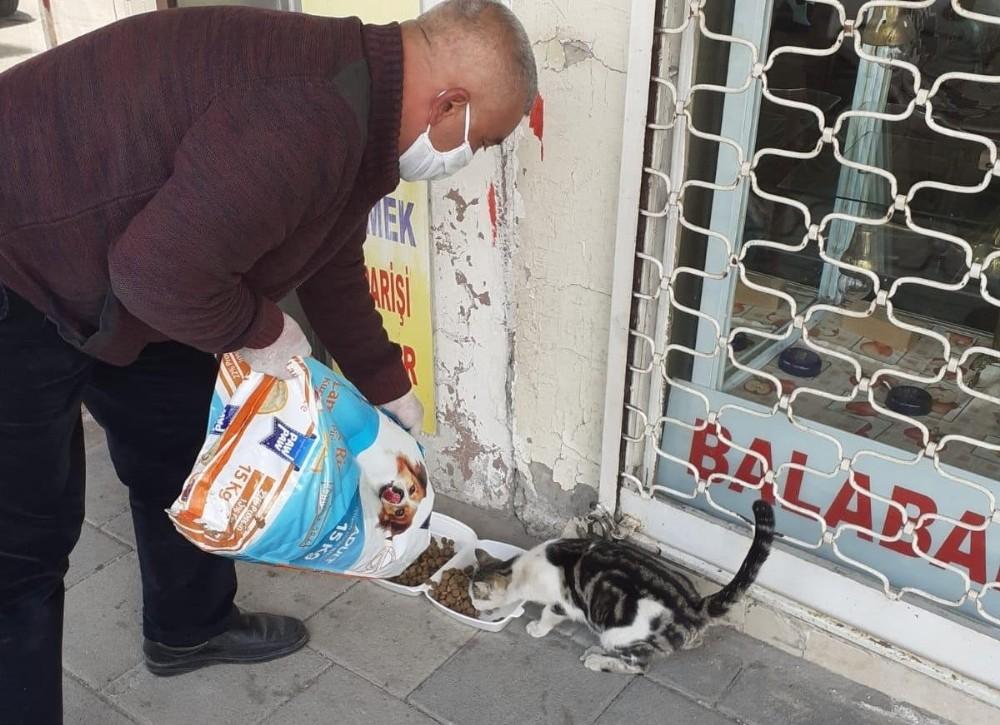 Akçadağ'da sokak hayvanları unutulmadı