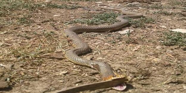 Akrep ve yılan paniği! Onlarca kişi hastanelerde acile koştu