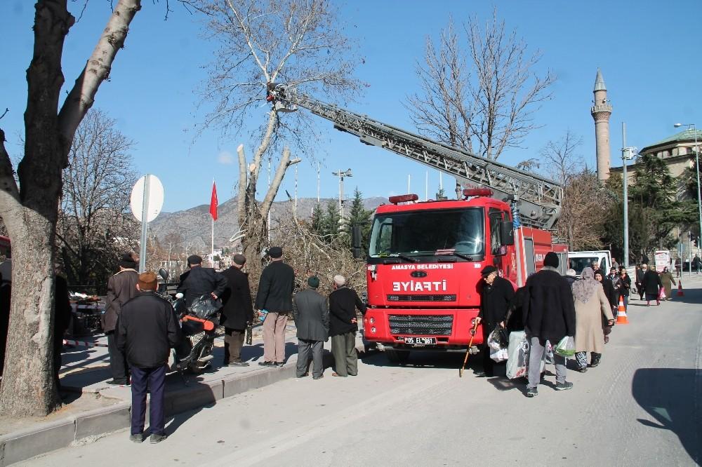 Amasya'da ağaçlara kış bakımı