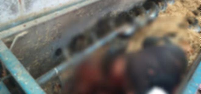 Amasya'da yem makinesine düşen çiftçi feci şekilde can verdi