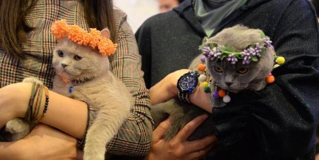 Ankara'da 'Kedi Güzellik Festivali' düzenlendi