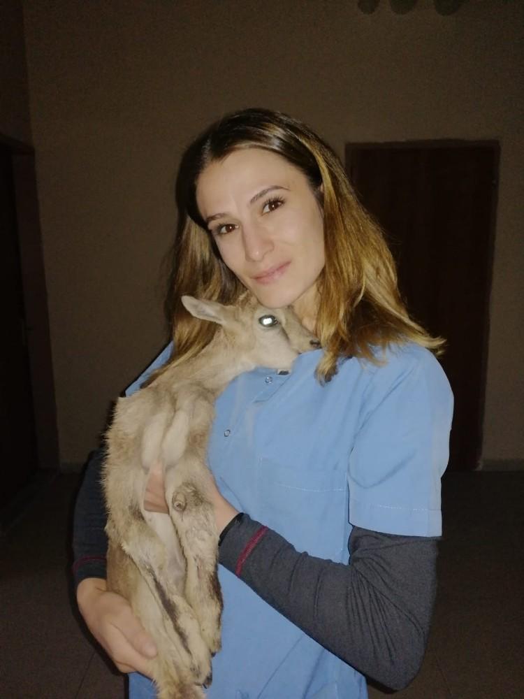 Anne şefkatini bayan veterinerde buldu