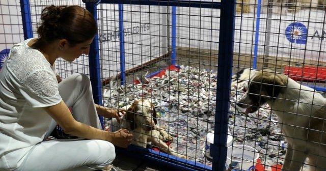 Antalya Büyükşehir Belediyesinden sokak hayvanları için su kabı