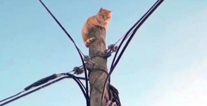 Ardahan'da köpek korkusu direğe tırmandırdı