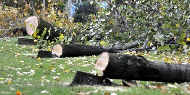 10 yıl boyunca ağaç kesmek yasak!