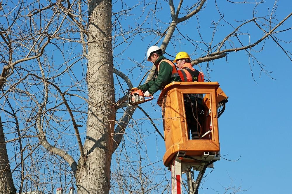 Ataşehir'de ağaç dalları elektriğe dönüşüyor