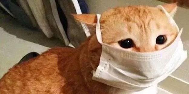 Avrupa ülkesinde koronavirüs kâbusu! Kedileri de itlaf ettiler