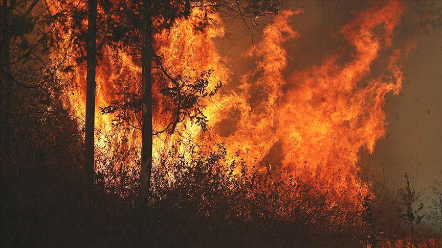 Avustralya'daki orman yangınlarında 30 ev yandı