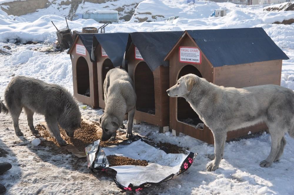 Avustralya'dan Yüksekova'ya köpek barınağı