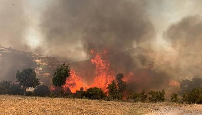 Aydın-Muğla sınırında yangın