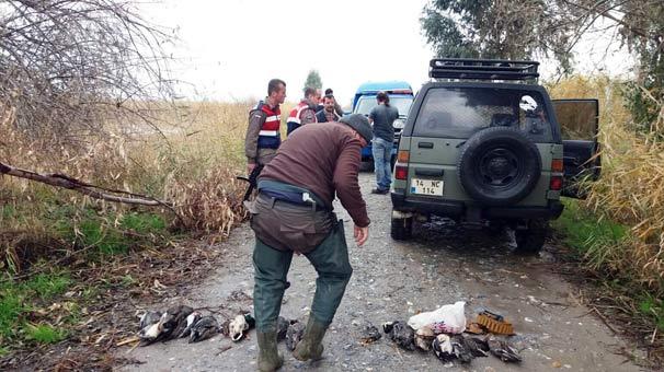 Aydın'da bir tutam et için ördekleri katlettiler