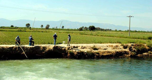 Aydın'da olta balık yerine yüksek gerilime takıldı