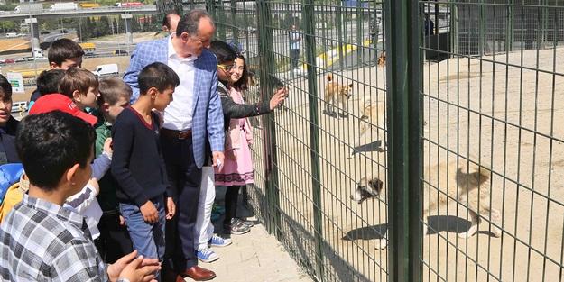 """""""Bağcılar'da 268 sokak hayvanı sahiplendirildi"""""""