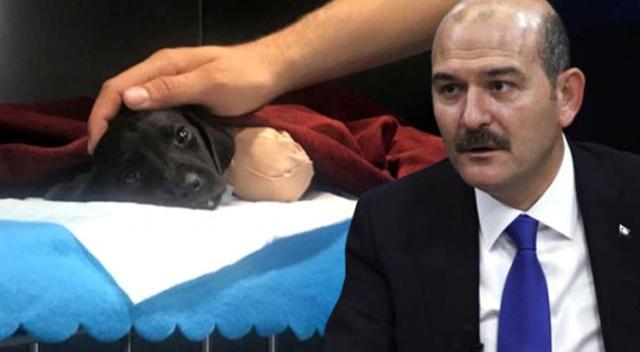 Bakan Süleyman Soylu'dan Türkiye'yi ayağa kaldıran yavru köpek için açıklama