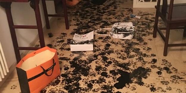 Bakın yaramaz köpek evi ne hale getirdi!
