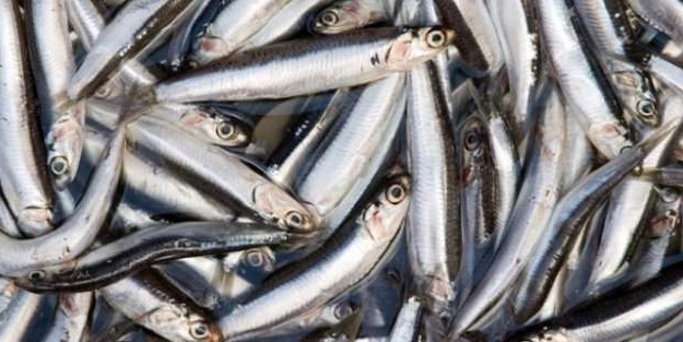 Balık bohçası tarifi