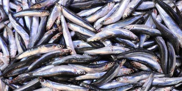 Balıkçılar müjdeyi verdi: Fiyatlar düşecek