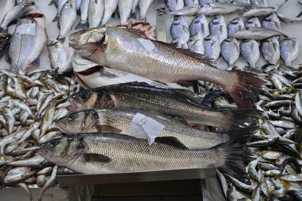 Balıkçılarda levrek sevinci