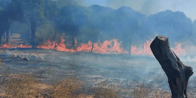 Balıkesir'de çamlık alanda çıkan yangında yeni gelişme