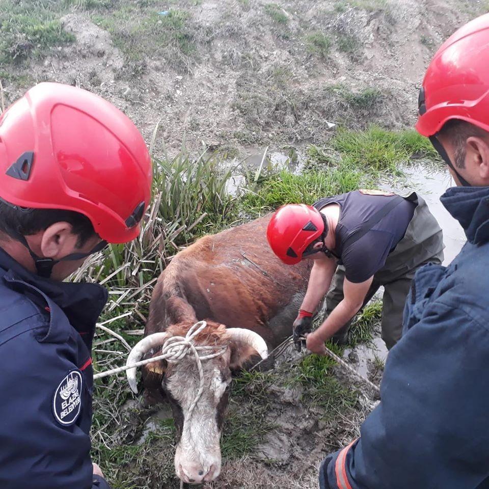 Bataklığa saplanan inek kurtarıldı