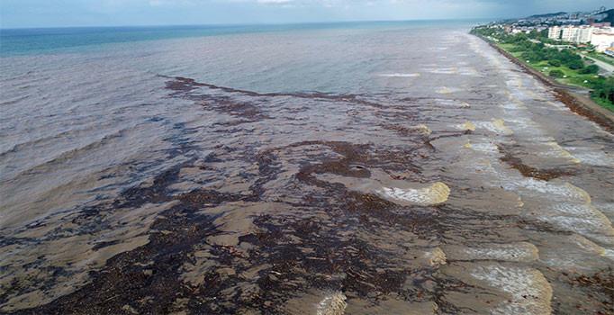 Bekir Pakdemirli: 600-700 ton fındık zarar gördü