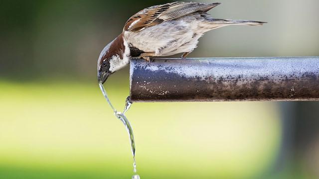 Belçika'da su sorunu korkutuyor